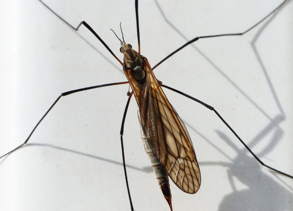 Mosquito Abatement and Your Stormwater System – What You Should Know